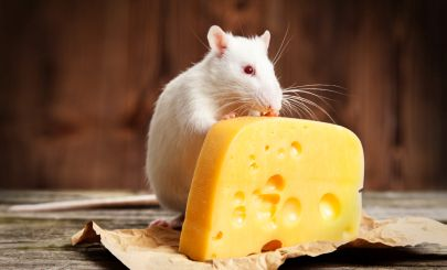 mouse-with-cheese-block